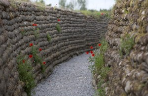 wwi-poppies